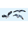 Flying Seagull vector image vector image
