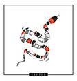 graphic of coral snake or micrurus vector image
