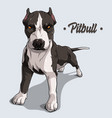 powerful dog breed pit bull standing in full vector image