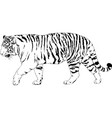 tiger drawn with ink from hands vector image vector image