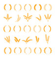 wheat and rye ears harvest barley grain growth vector image