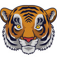 cartoon tiger head mascot vector image