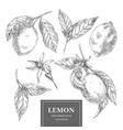 lemon hand drawn collection vector image