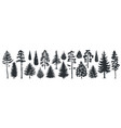 pine tree silhouettes evergreen forest firs and vector image