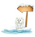 A polar bear below the wooden arrowboard vector image vector image