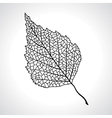 Black macro leaf of birch tree isolated vector image vector image