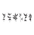 set different bamboo branch on white vector image