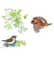 Watercolor colorful Birds and branches with green vector image vector image