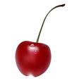cherry1 vector image vector image