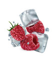 fresh raspberries with ice cubes and water vector image vector image