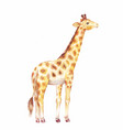 giraffe watercolor vector image vector image