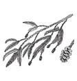 redwood branch vintage vector image vector image