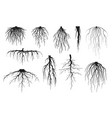 roots silhouettes vector image