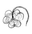 hand drawn of three leaf clovers on white backgrou vector image