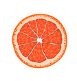 realistic grapefruit citrus slice vector image