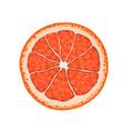 realistic grapefruit citrus slice vector image vector image