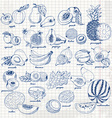 Set of fruits on paper hand drawing sketch vector image