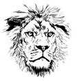 lion with little mane vector image