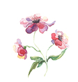 The spring flowers watercolor isolated vector image