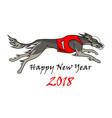 running dog saluki breed in dog racing dress vector image vector image
