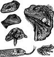 REPTILES - Hand Drawn vector image vector image