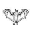 rousettus flying dog fox sketch vector image vector image