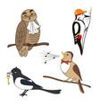 set of cartoon birds owl woodpecker nightingale vector image