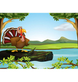 A turkey in the river vector image vector image