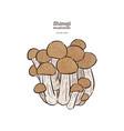 hand drawing a gourmet mushroom shimeji vector image vector image