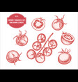 collection of hand drawn pastel cherry vector image vector image