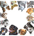 group dogs different breeds in square isolated vector image vector image