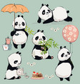 little panda collection vector image