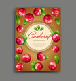 with realistic cranberry isolated vector image vector image