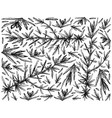 hand drawn of hijiki seaweed on white background vector image vector image