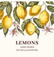 lemons hand drawn poster template vector image vector image