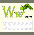 letter w tracing alphabet worksheets vector image
