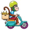 monkey on motor bike vector image