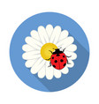 red ladybird on a camomile flower vector image vector image