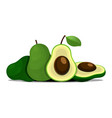 fresh fruit avocado isolated on white background vector image vector image