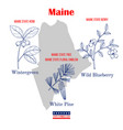 maine set usa official state symbols vector image