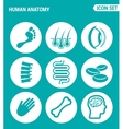 set of round icons white Human anatomy leg hair vector image