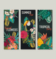 collection three cards with toucan vector image