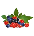 Forest berries vector image