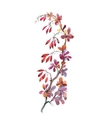 Watercolor with autumn dogwood vector image