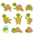 cartoon smiling turtle funny little turtles vector image vector image