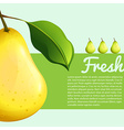 Poster design with fresh pear vector image vector image