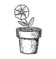 sketch potted flower vector image vector image