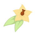 small yellow flower vector image vector image