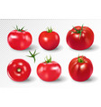 tomato set pink salad tomato collection photo vector image