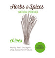 hand drawn chives vector image vector image